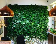 Green Walls @ Hotel Dragului Predeal