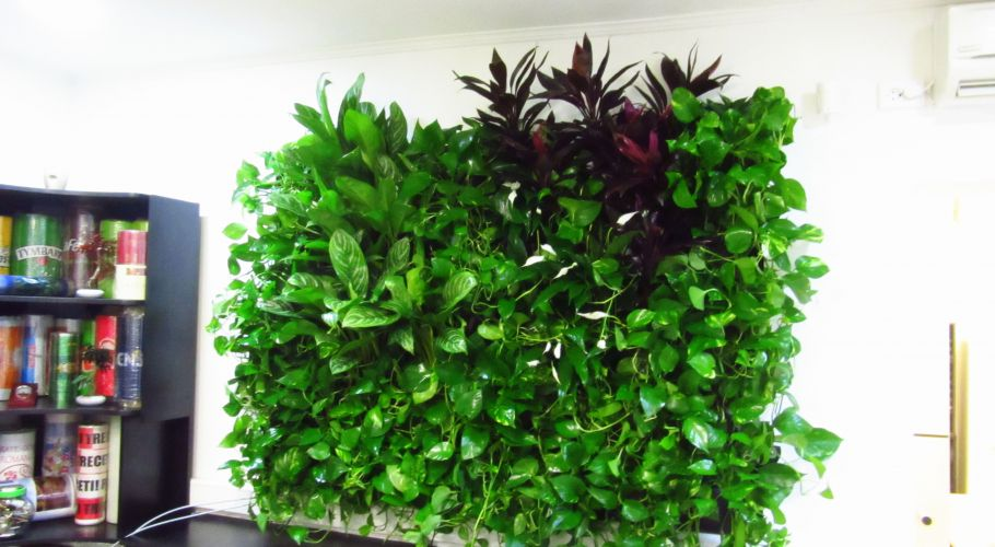 Green Walls @ Crisco