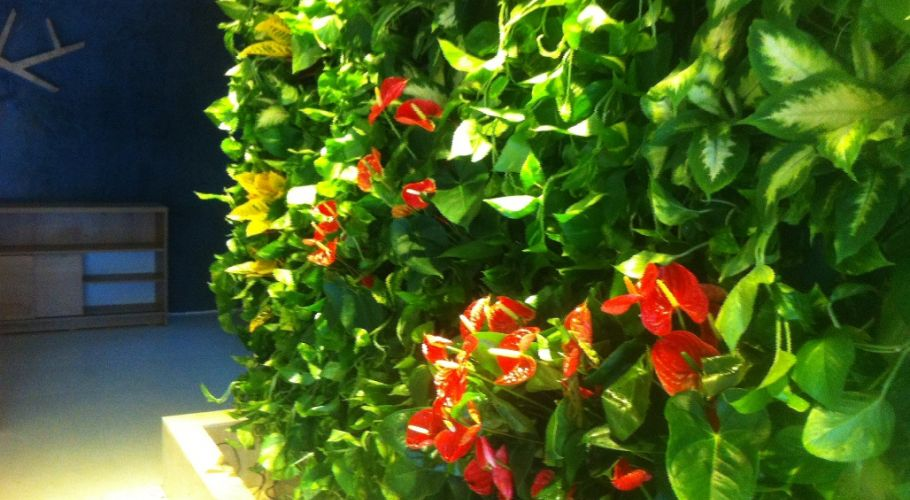Green Walls @ Iasi